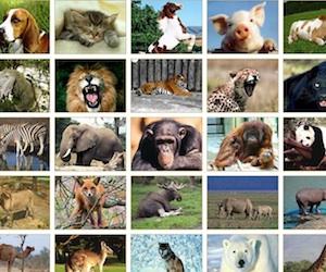 Zoo online.